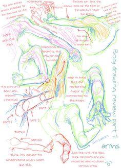 人体结构参考-肩&臂