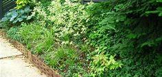 Veriegated Perennials