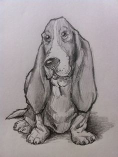 If you want to know how to draw a Bassett Hound dog, then just follow along with this simple, step-by-step tutorial. Anyone can be taught to draw if you follow a few simple directions...