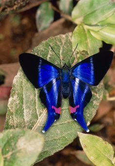 The cool butterfly species found in the world