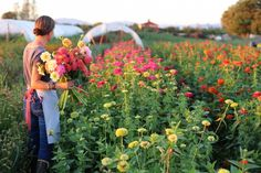 love to have a cutting garden. Floret Flower Farm