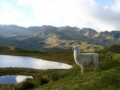 Viajemos a las tierras altas del Ecuador (Tour desde Guayaquil hacia Cuenca en la Región Andina). Día 5 (Parque Nacional Cajas en Cuenca)
