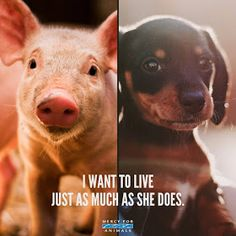 This is my collection of vegan memes and graphics. They are free to use. Vegan Memes, Vegan Quotes, Mercy For Animals, Save Animals, Animal Facts, Animal Quotes, Animal Rights Quotes, Animal Help, Mon Combat