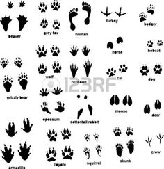 deer silhouette: Various animal tracks Illustration