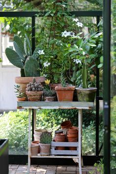 In Denmark a greenhouse is the summer equivalent of the screened-in porch. During the short summers weather is variable, yet days are long. How To Make Compost, Cucumber Plant, Potting Tables, Greenhouse Interiors, Cactus, Citrus Trees, Garden Shop, Dream Garden, Garden Table