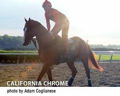 Belmont Stakes News » California Chrome jogs on Belmont Park main track