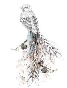 Bird illustration / by Kelly Smith Kelly Smith, Rose Art, Bird Illustration, Bird Art, Art Drawings, Art Photography, Fine Art Prints, Sketches, Artwork