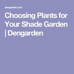 Choosing Plants for Your Shade Garden | Dengarden
