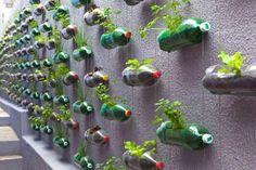 Væg med tomatplanter i engangsplast flasker
