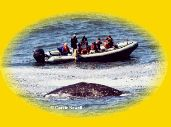 Whale Research Eco Excursions Depot Bay, OR.an amazing way to experience whale watching! Lincoln City Oregon, Depoe Bay, Bay Boats, Oregon Washington, Boat Tours, Whale Watching, Carrie, Zodiac, Beautiful Places