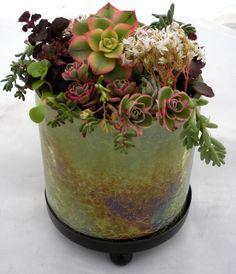 Succulent centerpiece by fairy-garden.com