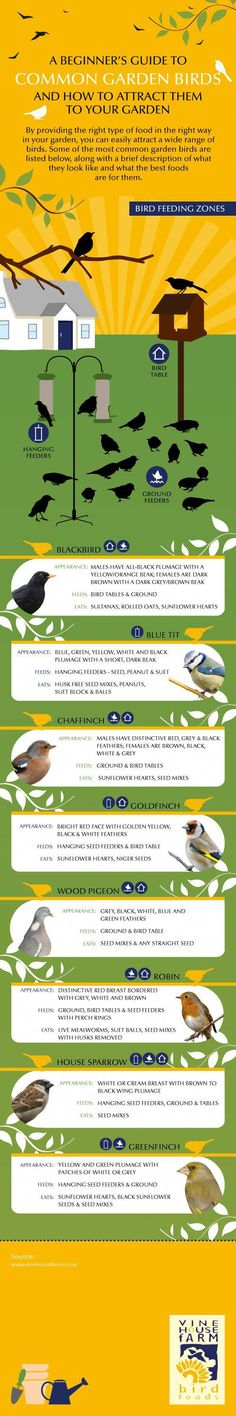 Infographic on attracting common garden birds from Vine House Farm. by bbooky Common Garden Birds, Common Birds, Birds And The Bees, How To Attract Birds, Bird Food, All Nature, Backyard Birds, Wild Birds, Garden Projects