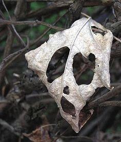 Decaying leaf ... WOW, so totally ghost-like ... you just cannot self-create things like this!
