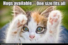 Sweet kitten. Hugs!!