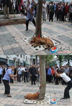 #WooPic #Picture STUPID OLD FOLK!!DONT TORTURE THE ANIMAL -> http://www.woopic.woolei.com?p=461740633863973