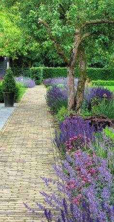 deze borders wil ik wel langs het gras: salvia nemrosa, alchemilla, atrantia major, heuchera, anemone japponica en buxus-bollen