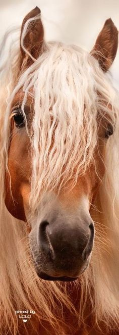 Horse with a good hair day! Gorgeous horse photography - Up-close - Horse by lorrie All The Pretty Horses, Beautiful Horses, Animals Beautiful, Cute Animals, Cute Horses, Horse Love, Horse Photos, Horse Pictures, Majestic Horse