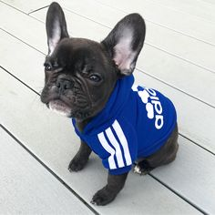 https://frenchie.world/search?q=hoodie