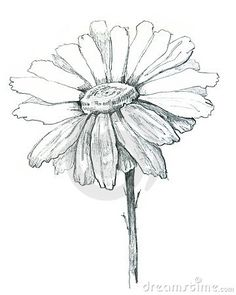 Daisy Draw Royalty Free Stock Image - Image: 19123886