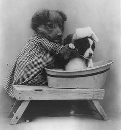 Sweet vintage cuteness  - Mama dog washing her puppy #vintagedogs #vintagepic #vintagecuteness
