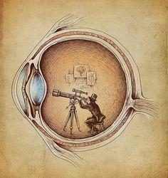 How vision works. Find more Eye Care cartoons: pinterest.com/mediamed/eyecare-cartoons/