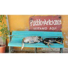 Un par de locales listos para recibir a quien sea. Pueblo de artesanos parte 2.  #openmyworld #dogs #thegreatoutdoors #travelgram #travelling #traveldiary #lovetotravel #lifeisgood #chile #visitchile #valledelelqui #wanderlust #vsco
