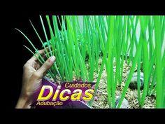 Como Cultivar Cebolinha |DICAS, CUIDADOS, ADUBAÇÃO| - YouTube