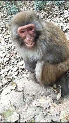Monkey Gif, Monkey Smiling, Cute Baby Monkey, Monkey Pictures, Wild Animals Pictures, Funny Animal Pictures, Funny Animal Jokes, Cute Funny Animals, Cute Baby Animals