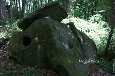 Древние дольмены в Сочинском Национальном парке - megalithica.ru Trunks, Plants, Drift Wood, Tree Trunks, Plant, Planets