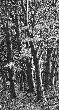 Wood engraving artist Sue Scullard portfolio of prints she is based in Kent, UK Lino Art, Woodcut Art, Wood Engraving, Engraving Ideas, Engraving Tools, Historia Natural, Scratchboard, Ink Pen Drawings, Woodblock Print