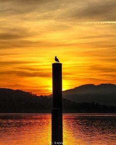 Guardo i tuoi occhi  come chi guarda all'orizzonte  è riscatta la voce dal silenzio  con un grido viscerale  bocca a bocca  che ci fonde il respiro.  L. Licea ____________________  Miro a tus ojos  como quién mira al horizonte  y rescata su voz desde el silencio con grito visceral  boca a boca que nos funde el respiro.  L. Licea ____________________  I look into your eyes as who looks to the horizon and rescues his voice from the silence with a visceral cry mouth to mouth that melts our…