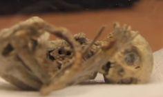 Βρέθηκε δείγμα νεράιδας, αλλά το DNA της δεν με μοιάζει με κανένα άλλο ζωντανό οργανισμό (Video) Crazynews.gr
