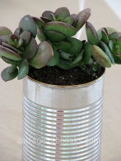 These would be so cute in my kitchen window. It would even be cute to plant succulents in a mason jar. :)