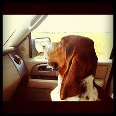 Love a dog riding shotgun!  This is Pioneer Woman's basset hound, Charlie.