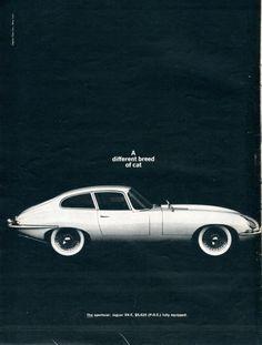 thechicane: 1964 Jaguar XK-E Ad. Newsweek. February 1964