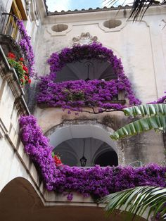 Purple Flowers in the Amalfi Coast on a trip from Rome