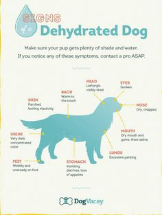 Dog And Puppies Diy pet signs of dehydration.Dog And Puppies Diy pet signs of dehydration Dog Health Tips, Pet Health, Health Care, Diy Pet, Game Mode, Gato Gif, Fu Dog, Dog Information, Dog Care Tips