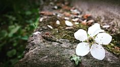 #myphoto #blossom