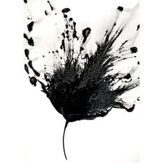 Black White Art Abstract Flower Painting 5x7 Artwork Original Floral ($42) ❤ liked on Polyvore featuring home, home decor, wall art, art, black and white abstract wall art, floral paintings, abstract painting, flower stem and abstract flower paintings