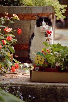 cats love gardens
