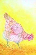 ansichtkaart kip Brechtje Duijzer http://brechtjeduijzer.nl/