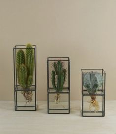 I didn't know I could do this with cacti! :) :o