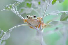 Ready to go! Frog Or Toad, Frog Frog, Baby Animals, Cute Animals, Pet Frogs, Frog Pictures, Reptiles And Amphibians, Oui Oui, Animals Of The World