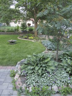 Hosta Forum - GardenWeb