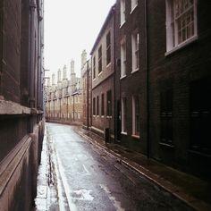 Lively Rain