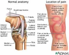 Before we examine possible causes of knee pain, let's take a closer look at a normal knee joint.: Step 5 of 5 - Specific Location of Knee Pain