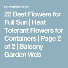 22 Best Flowers for Full Sun | Heat Tolerant Flowers for Containers | Page 2 of 2 | Balcony Garden Web