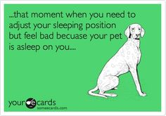 Funny Confession Ecard: ...that moment when you need to adjust your sleeping position but feel bad becuase your pet is asleep on you.... Thanks quotes o.O