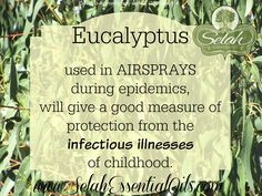 Eucalyptus Globulus essential oil used in airsprays during epidemics will give a good measure of protection from the infectious illnesses of childhood.