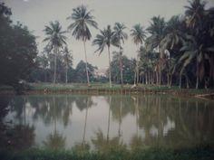 A farm along Sembawang road - 80's (present Chong Pang Camp)